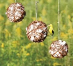 Make it easier for the birds to bind and line their nests. Make or purchase a grapevine globes and stuff in nesting materials such as raw cotton, dog hair, bits of wool or lengths of cut twine for the busy builder birds this spring.