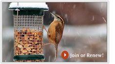 Project Feeder Watch website. Kids can learn to identify common birds and participate in project feeder watch.