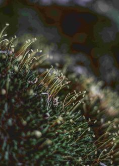 #forest #green #moss #aesthetic #plant #outdoors #nature