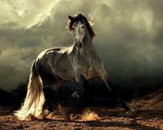 """When God wanted to create the horse, he said to the South Wind: 'I want to make a creature of you!"""" Emir A. Kader"""