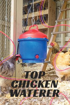 Given the large capacity, conical-shaped lid and the built-in thermostat, this Premier 1 Supplies drinker is great for anyone needing to provide water for birds in the easiest way possible. It's especially great for those of you with birds that like to explore and would most likely end up perching on top of it. Heated Chicken Waterer, Automatic Chicken Waterer, Poultry, Birds, Explore, Outdoor Decor, Top, Backyard Chickens, Bird