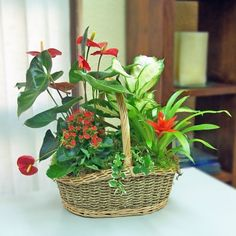 Rustic Hampers, Dish Garden, Garden Pictures, Modern Landscaping, Garden Crafts, Tropical Plants, Indoor Plants, Pot Plants, Succulents Garden