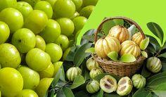 Le Garcinia Cambogia est de plus en plus connu à travers le monde comme étant un complément alimentaire minceur de grande qualité.