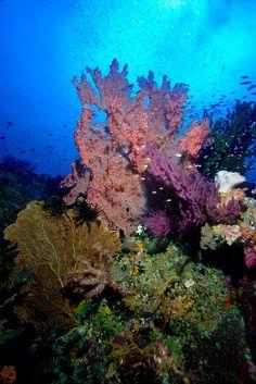 Hahaha! Coral I love it Campbell hahahahahahahaha!!!!