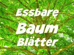 Essbare Baumblätter – die Wildkräuterfee