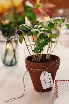 potted basil wedding favors // photo by Louisa Bailey