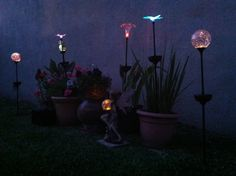 Faeries, Lights, and Pretty Plants