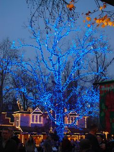 awesome blue tree at Silver Dollar City