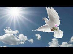 Canvas Wall Art, Canvas Prints, Art Prints, Nicolas Vanier, Dove Flying, Flying Birds, Kinds Of Poetry, Dove Bird, Sky Art