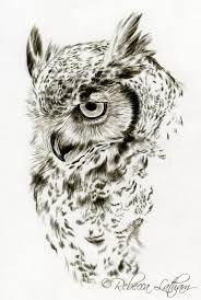 132 Mejores Imágenes De Búhos Y Lechuzas Cutest Animals Owls Y