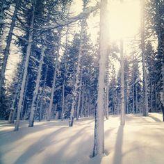 Bosc de neu i sol - @mgmerelles- #webstagram