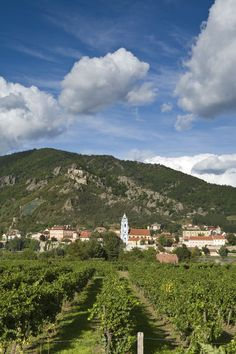 vineyards, Dürnstein at Danube, Wachau, Lower Austria, Austria ~ UNESCO World Heritage Site Photo: Jon Arnold Images, Doug Pearson