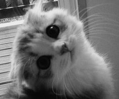 I don't like cats, but this is a cute kitty!