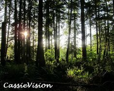 8x10 Forest Sunlight Trees Pacific Northwest by CassieVision, $7.50