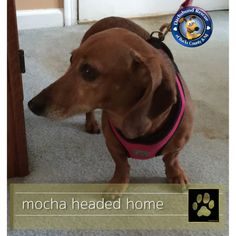 GOLD PAW ALERT Great news for Mocha!!! She has found her forever home!!