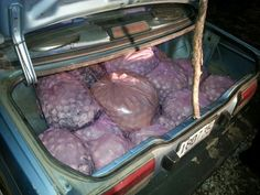 Costa Rica's National Police have seized what is likely the biggest illegal stash of poached sea turtle eggs this year, just outside of Nicoya, Guanacaste.