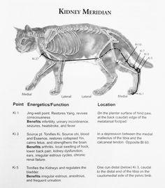 Acu-Cat: A Guide to Feline Acupressure | Animal Wellness Guide
