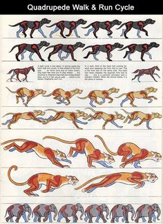 As I try to hand draw a walk cycle, this is a good reference. #walkcycle #animation #quadroped
