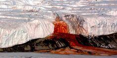 Un glacial de sang a l'Antàrtida