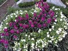 grabgestaltung sommer bepflanzung friedhof pinterest. Black Bedroom Furniture Sets. Home Design Ideas