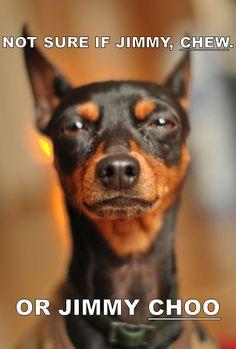best dogs ever! Mini Pinscher, Miniature Pinscher, Doberman Pinscher, Mini Doberman, Funny Animals, Cute Animals, Puppies And Kitties, Doggies, Horses And Dogs