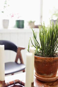 an-magritt #copper #diycopper #diy #succulent #greenplant