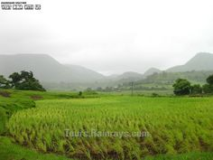 Tourist Attraction India: Jharkhand Tourist Place | green
