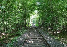Update Marts: Tunnel of Love :प्यार की सुरंग जहाँ पूरी होती है ह. Tunnel Of Love Ukraine, Railroad Tracks, The Good Place, News Update, Amazing, Places, Lugares, Train Tracks