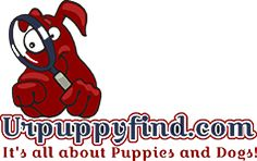 Fetch  through Urpuppyfind.com where we offer a  user  24/7 user friendly online puppies and dog site. We offer a huge inventory of pure and mix breed puppies for sale nation wide.  They are hundreds of puppies and dogs getting listed daily and seeking their new homes. It's fast and Free to Sign Up!