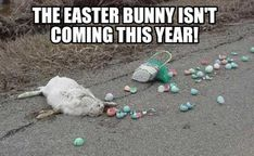 Make funny memes with Meme Maker. Upload your own images! Our meme generator is mobile-friendly and has many extra options. Happy Easter Meme, Funny Easter Memes, Funny Easter Pictures, Easter Bunny Images, Funny Easter Bunny, Photos On Facebook, For Facebook, Bunny Meme, Easter Quotes