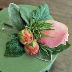 Pale pink rose buds with rosemary and lambsear accent for the gentlemen's boutonnieres.