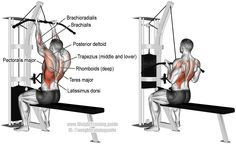 Reverse grip lat pulldown. A compound pull exercise. Main muscles worked: Latissimus Dorsi, Brachialis, Brachioradialis, Teres Major, Posterior Deltoid, Rhomboid Major, Rhomboid Minor, Levator Scapulae, Middle Trapezius, Lower Trapezius, Lower Pectoralis Major, and Pectoralis Minor. Biceps Brachii only acts as a dynamic stabilizer.