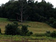 Brandywine Creek Park, PA