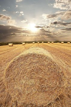 I love driving down the highway and seeing rolls of hay.  It always reminds me of home...