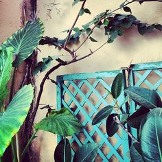Corfu, Copyright © Ellie Tsatsou Corfu, Planter Pots, Frame, Home Decor, Picture Frame, Decoration Home, Room Decor, Frames, Home Interior Design