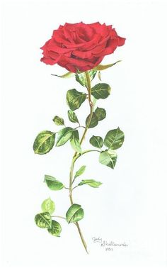 Long Stem Rose Tattoo Designs Rose With Stem Design Is Personally