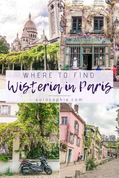 When & Where to Find the Best Wisteria in Paris: Your complete guide on how to find the pretty late spring purple climber throughout the French capital. Montmartre, Ile de la Cite, Paris, France