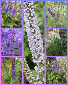 Ladder Decor, Outdoor Structures, Garden, Design, Home Decor, Garten, Decoration Home, Room Decor, Lawn And Garden