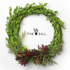 New York City Plant Design, Delivery and Maintenance. | The Sill