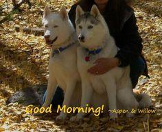 Husky Greetings on Pinterest | Good Morning, Husky and ...
