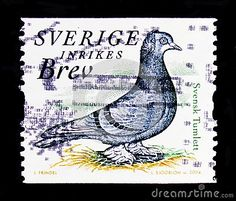 MOSCOW, RUSSIA - OCTOBER 3, 2017: A #stamp printed in #Sweden shows Swedish #Tumbler #Columba #livia #forma #domestica, #Fauna serie, #circa #2004