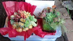 Miniature succulent garden gifts.  Design by Ana Calderon