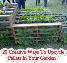 creative ways upcycle pallets your garden