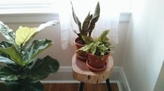 The humble house plant has never been hipper.