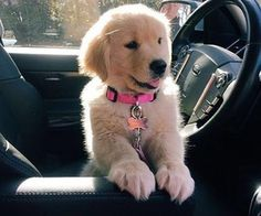 "aww-so-pretty: ""My favorite company! Cute Little Puppies, Cute Little Animals, Cute Dogs And Puppies, Baby Dogs, Pet Dogs, Dog Cat, Doggies, Golden Retrievers, Dogs Golden Retriever"