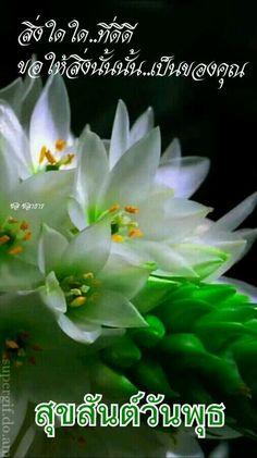 Happy Thursday, Happy Day, Good Morning Wednesday, Good Morning Flowers, Plants, Pictures, Plant, Planets