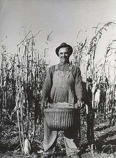 Arthur Rothstein - Fred Ukro with corn husked for yield test. Grundy County, Iowa, Oct, 1939
