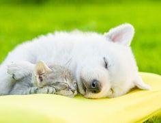 Descanso, por que ele é tão importante para o meu cão? | meusanimais.com.br