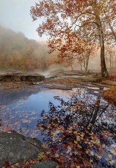 Autumn bluezz