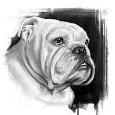 English Bulldog Art | Drawing Images